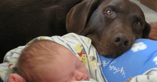 chien qui dort avec un bébé