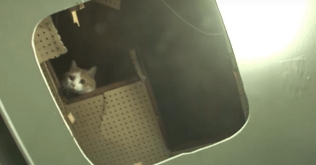 Le chat lors de son sauvetage