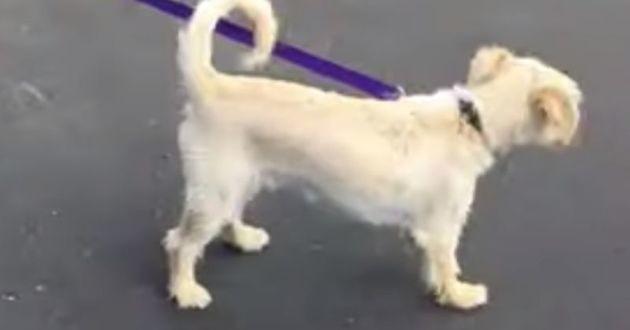Ce chien est tenu en laisse par un mystérieux promeneur