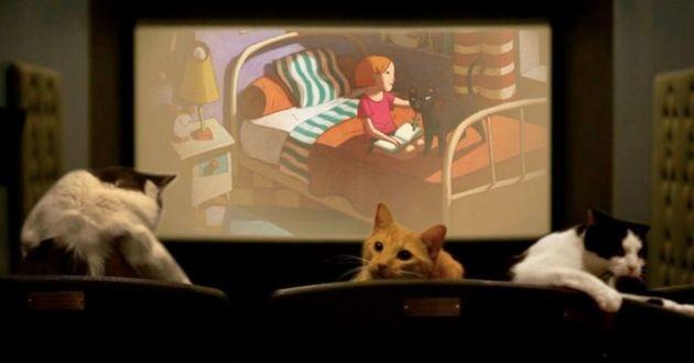 Des chats à l'assaut du cinéma