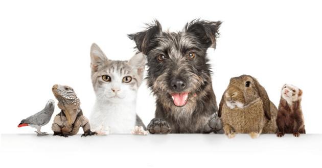 Un collectif de stars réclame un ministère de la protection animale