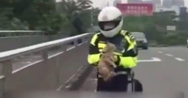 Ce policier à moto sauve un chaton en pleine voie