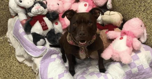 Cette chienne vit au refuge depuis 400 jours