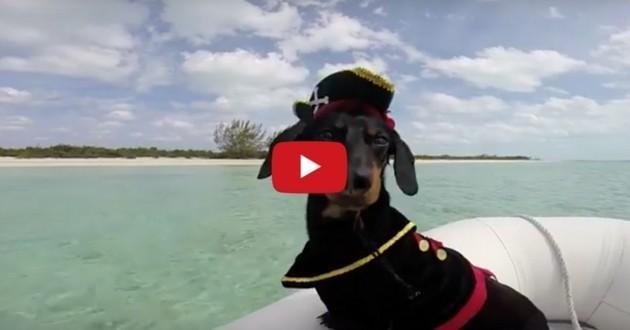 Crusoe Teckel Bahamas