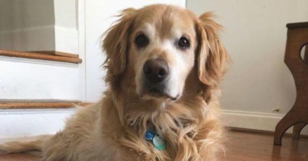 Voici Charlie, son chien tant aimé