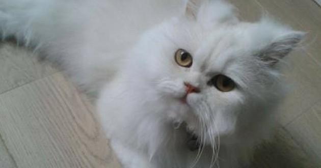 Un chat retrouvé grâce à une médium