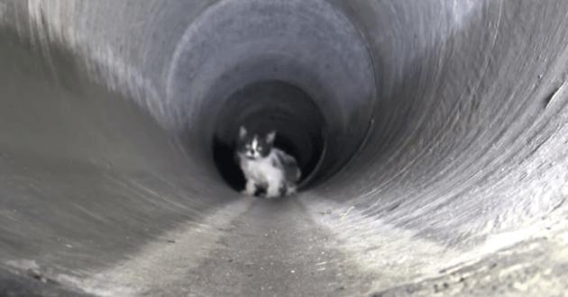 Le chat retrouvé dans l'égout