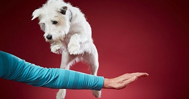 Smurf chien record