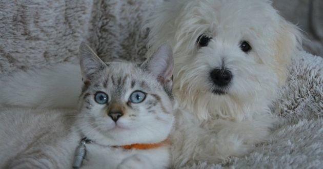 En Russie, la confiscation des animaux de compagnie aux personnes endettées est désormais interdite