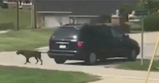 Le chien sortant de la voiture