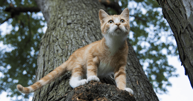 Le policier s'est retrouvé piégé dans l'arbre avec le chat
