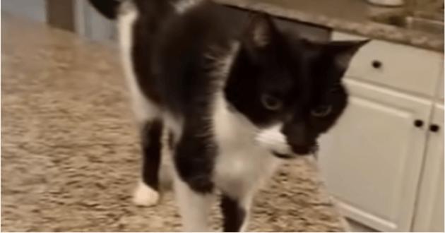 """Ce chat a un drôle de """"miaou"""""""