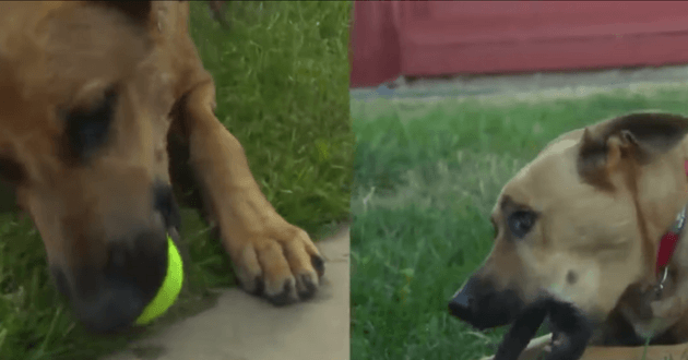 Ils trouvent leur chien et celui d'une autre famille