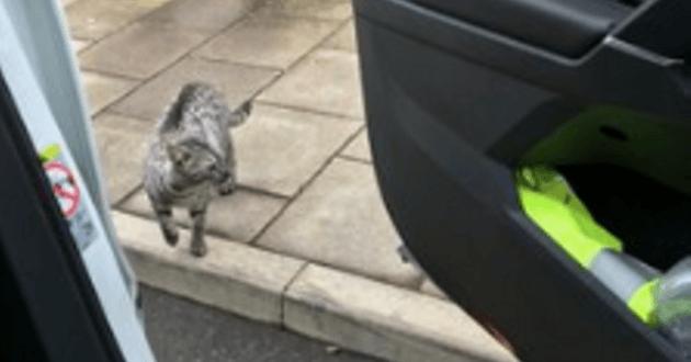 Voici Lewis, le chat baladeur