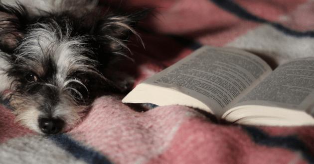 Chien allongé près d'un livre