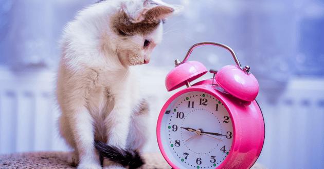 chat à côté d'un réveil