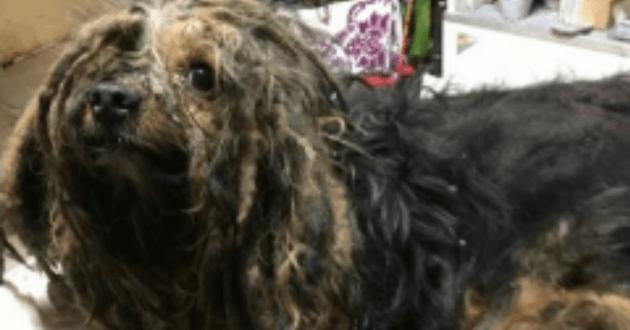 Pendant 9 ans, elle laisse son chien enfermé dans sa cave : ce qu'elle explique au tribunal laisse sans voix