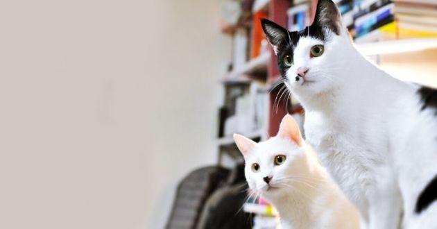 Deux chats infectés au Covid-19 à New-York