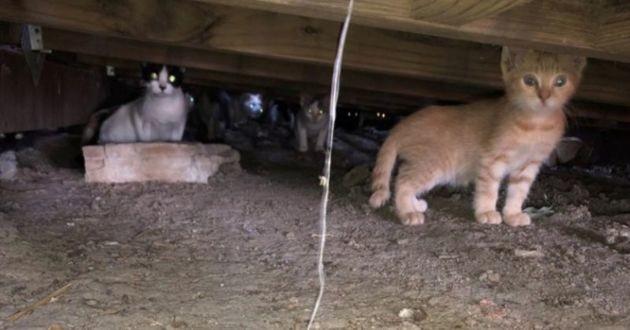 Plus de 50 chatons sauvés d'une maison