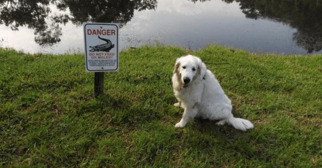 Le chien est sain et sauf