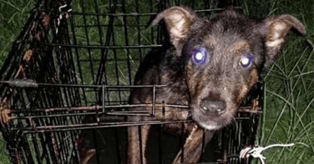 Le chiot découvert dans une cage avec un mot