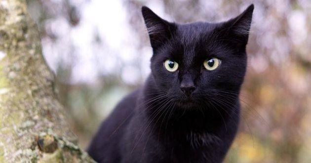 Perdu en Allemagne, le chat a été retrouvé en France