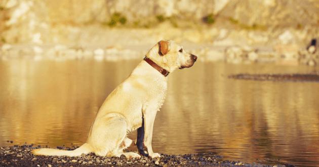 Le Labrador était mort battu et noyé