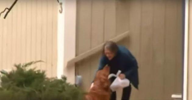 Le chien livrant son sac de courses à sa voisine