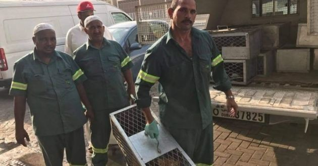 Des employés de la ville embarquant des chats errants