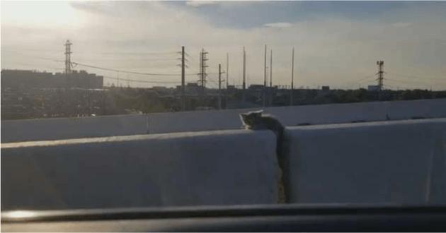 Ce chaton était coincé sur l'autoroute
