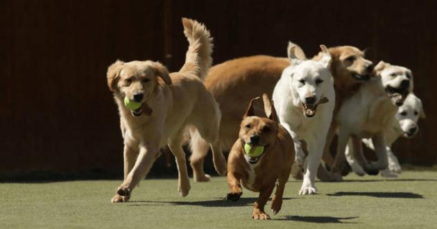 Des chiens de la garderie