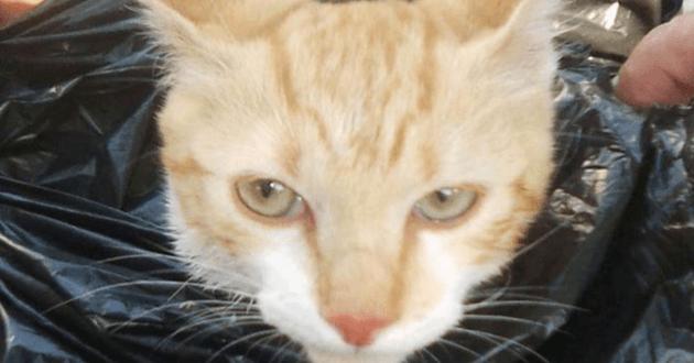 Le chaton après son sauvetage
