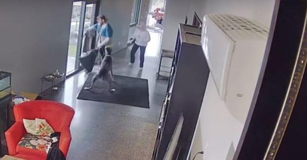Attaqué par le chien, l'homme prend la fuite