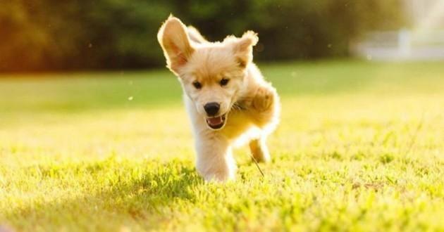 7 chiens stars du Web qui règnent aussi sur Wamiz