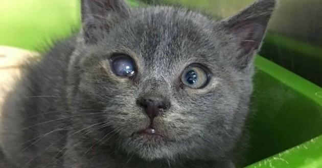 Berlingot chaton borgne strabisme