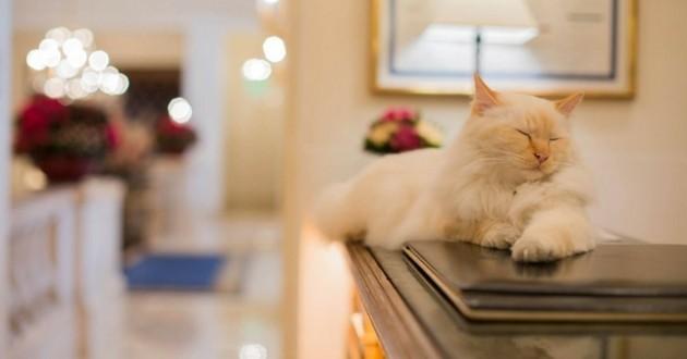 fa raon et kl opatre les chats qui r gnent sur l h tel bristol insolite wamiz. Black Bedroom Furniture Sets. Home Design Ideas