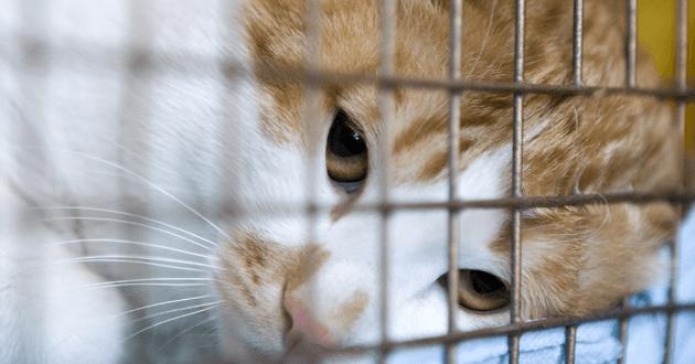 Chat en cage