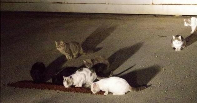 chats morts super U
