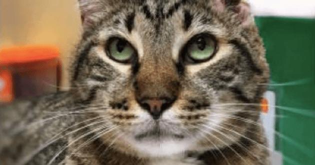 Le chat a des séquelles irréversibles