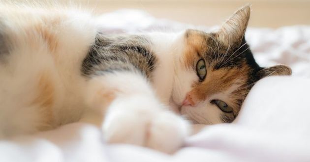 Les chats, un frein aux rencontres en ligne