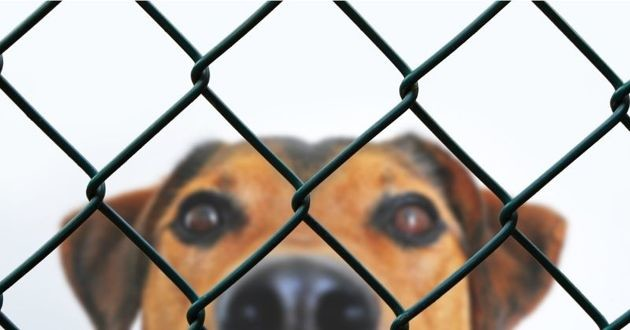 Ne pas préciser leur race aiderait les chiens à être adoptés plus rapidement