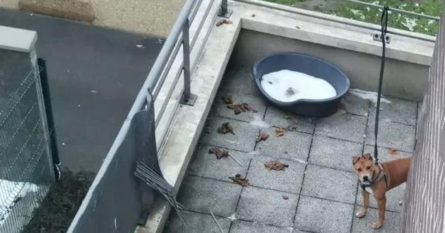 La petite chienne passait sa vie entière attachée sur le balcon