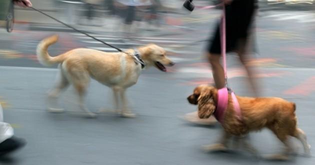 chiens en ville