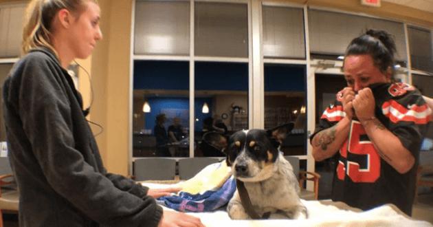Les sauveteurs découvrant le chien