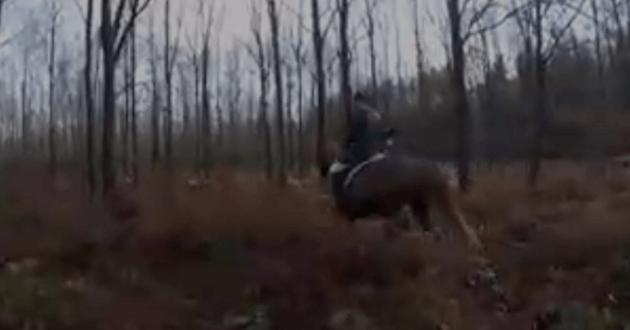 Des croquettes mettent fin à une chasse à courre