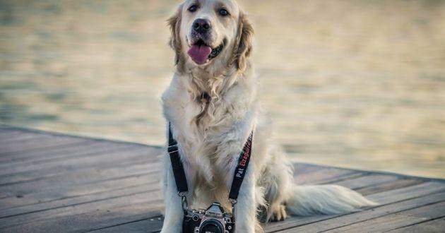 Un concours photo national pour lutter contre les abandons de nos animaux de compagnie