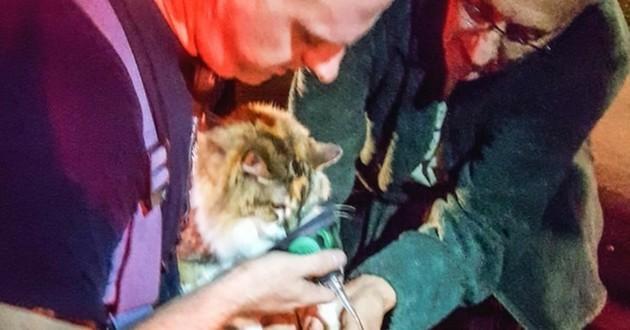 chat sauvé incendie