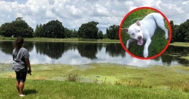 Elle femme et son chien près d'un lac