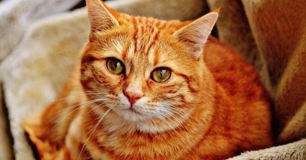 Un deuxième chat atteint au covid-19 en France