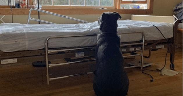 Le chien attend son maître décédé